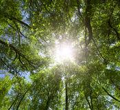 green-forest-sun-light-treetops-27832795